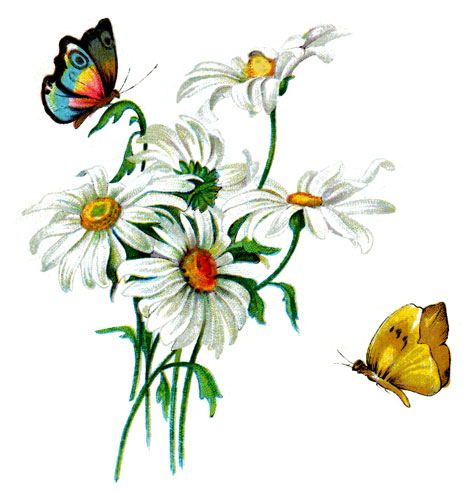 drawings-of-butterflies-6
